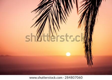 Silhouette of palm branch at sunset - stock photo