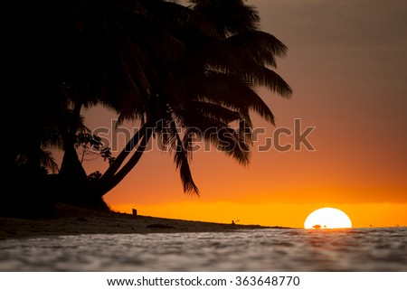 silhouette of palm tree on beach during sunset at fiji - stock photo