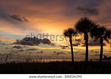 Silhouette of palm trees and sea grass at sunset on the Crescent Beach, Gulf Coast, Siesta Key, Florida - stock photo