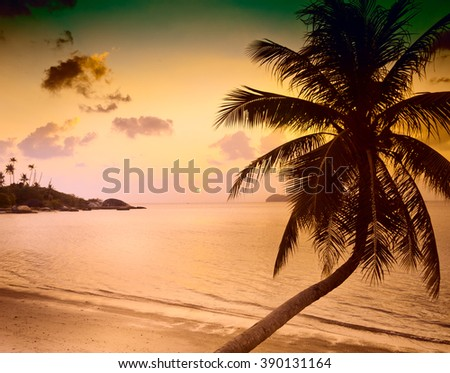 silhouette of palm trees at sunset on the sea. Image with retro  effect