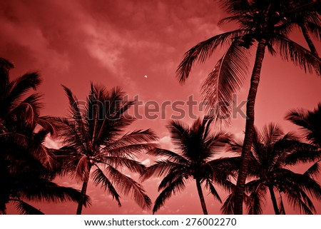 Silhouette of palm trees on tropical sunset, toned photo. - stock photo