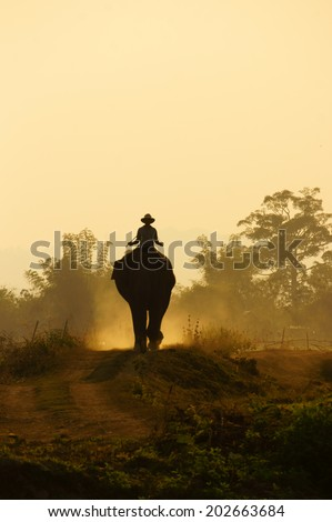 Silhouette of people ride elephant walking on the path at Vietnam countryside, the dusty way by dust of soil, mahout ride this animal for travel in Buon Me Thuot