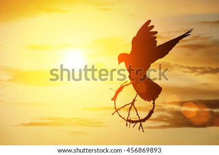 silhouette of pigeon dove holding branch in peace sign shape flying on sunset sky for freedom and peace concept ,international day of peace 2016