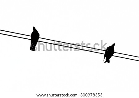 silhouette of pigeon two on the wire on white background