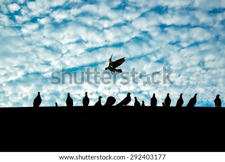 Silhouette of pigeons on the top of a roof