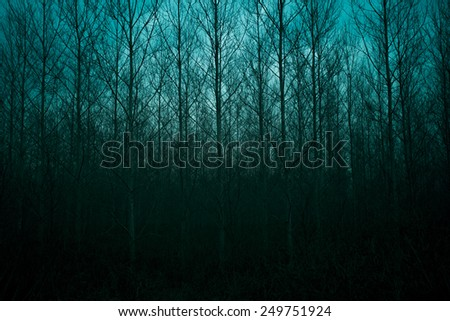 Silhouette of pine forest with mystic sky - stock photo