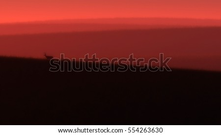 Silhouette of red deer standing on grassy hill at sunset. 3D rendering.