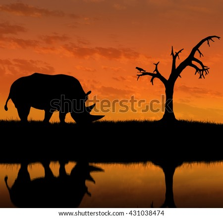 Silhouette of rhino near the river. The concept of wildlife