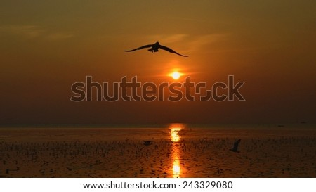 Silhouette of seagulls flying at sunset - stock photo