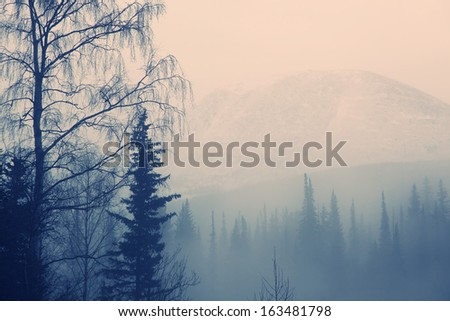 silhouette of the birch on a background of mountains - stock photo