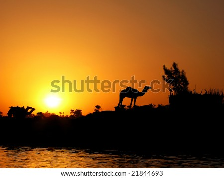 Silhouette of the camel against sunset on Nile in Egypt