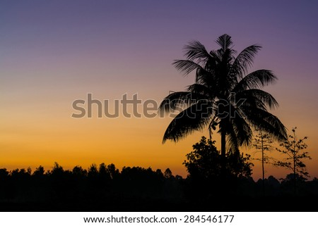 Silhouette of the coconut trees in the quiet countryside spectacular sunrise or sunset