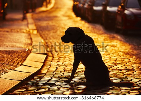 Silhouette of the dog on the street at sunset. - stock photo
