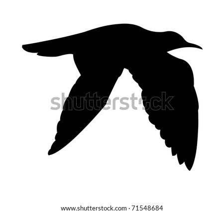 silhouette of the sea bird on white background - stock photo