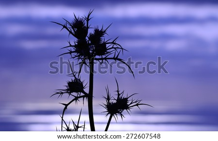 Silhouette of thistle flowers on colored horizon at dawn - stock photo