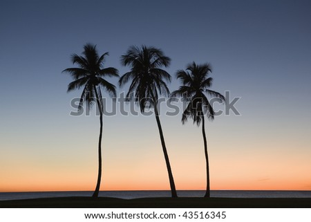 Silhouette of three palm trees on the beach - stock photo