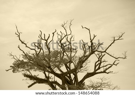 Silhouette of tree.
