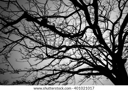 Silhouette of tree after sunset