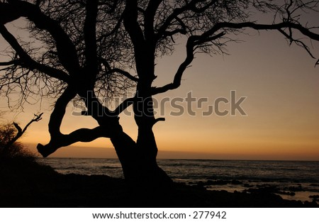 Silhouette of tree against sunset in Hawaii