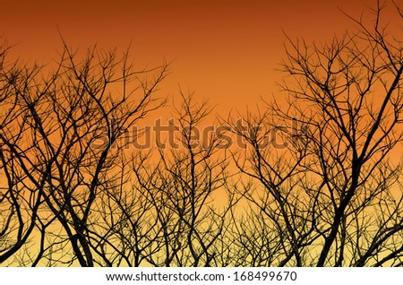 silhouette of tree branches - stock photo