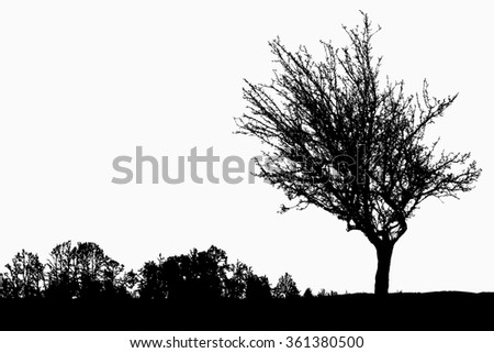 Silhouette of tree, bush with bare branches. Winter scenery trees afar landscape and black space for text illustration