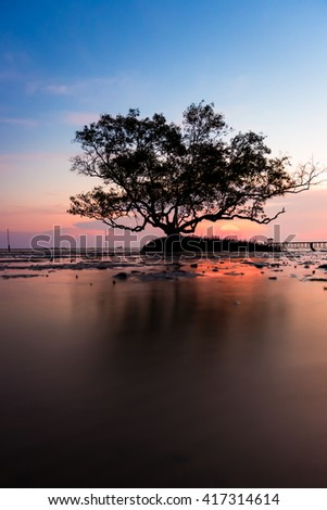 Silhouette of tree on the lakes on twilight time