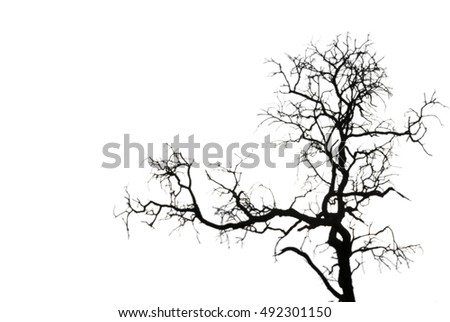 silhouette of tree on white background
