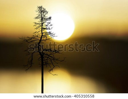 silhouette of tree on yellow and orange sky at sunset - stock photo
