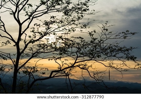 Silhouette of tree with the sun behind the tree