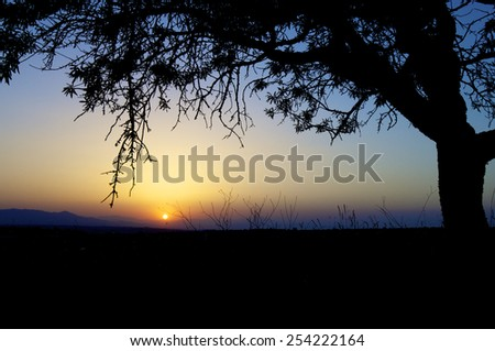 Silhouette of trees at sunset, Zaragoza Province, Aragon, Spain. - stock photo