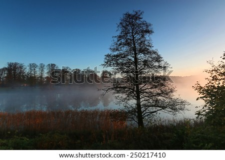 Silhouette of trees by the lake a foggy morning in October. - stock photo
