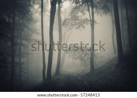 silhouette of trees in a forest with fog - stock photo