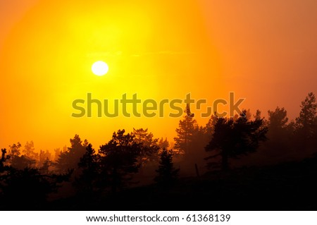Silhouette of trees in sunset. Due to intense light background trees are lighter and coming towards the foreground trees get darker and darker. These form nice layers. - stock photo