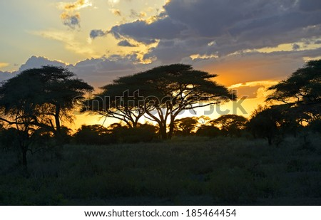 Silhouette of trees sunset in the African savannah. Kenya