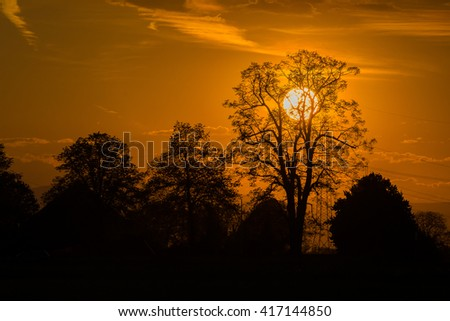 Silhouette of trees with the sun behind the tree - stock photo