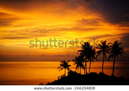 Silhouette of tropical palms during the magic sunset in Bali - stock photo