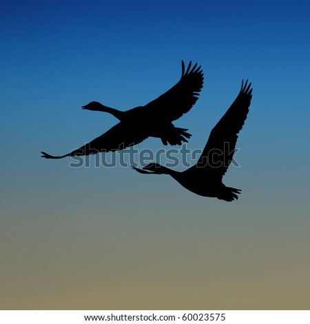 Silhouette of two Canada geese in flight in night sky - stock photo