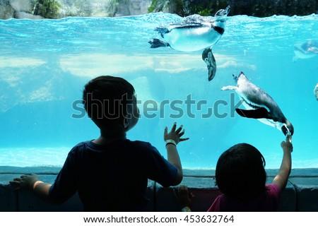 Silhouette of two children enjoying watching penguin in an Aquarium - stock photo