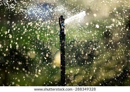 silhouette of water sprinkler - stock photo