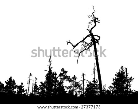 silhouette old tree on white background - stock photo