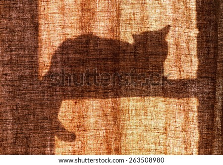 silhouette on the curtain lying on the window cat - stock photo