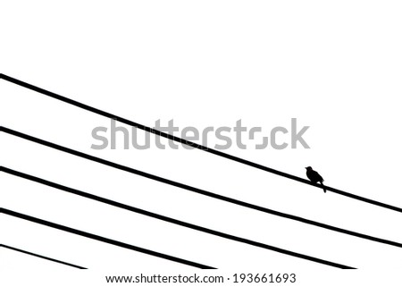 silhouette one bird standing on electric wire