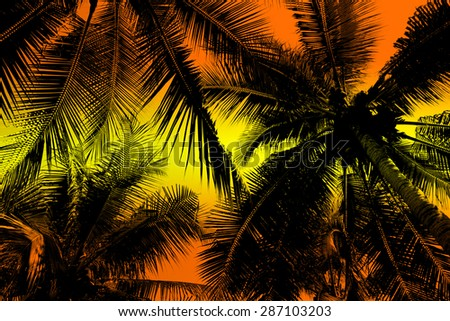 Silhouette palm tree.
