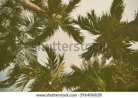 Silhouette palm tree with vintage filter (background) - stock photo
