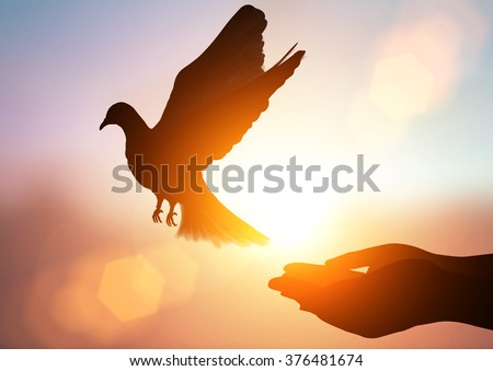 silhouette pigeon flying out of two hand and freedom concept and freedom background - stock photo