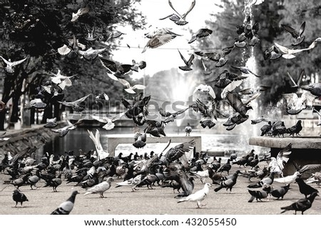 silhouette pigeon flying out of two hand , freedom concept,freedom background - stock photo