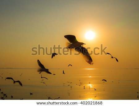 Silhouette Seagull Sunset