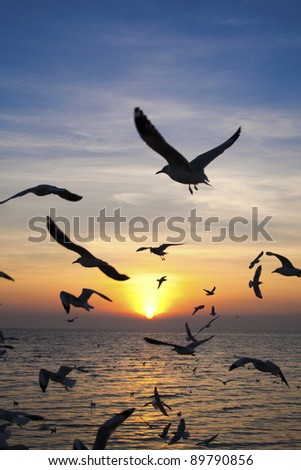 Silhouette seagulls - stock photo