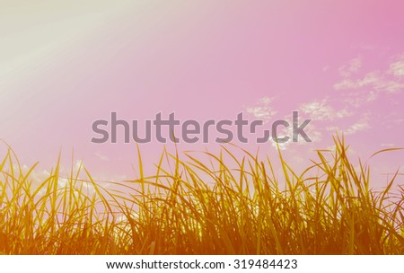 silhouette shot image of Grass and sky in shiny day for background usage.