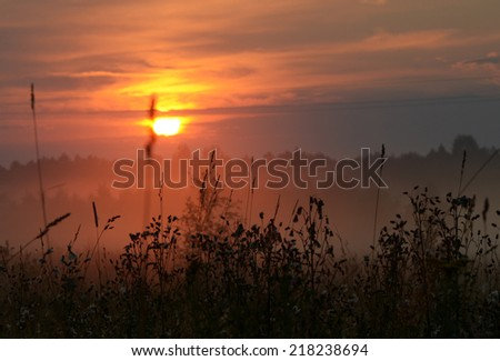 silhouette summer grass in nighy fall under sun - stock photo
